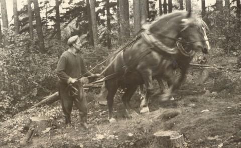 Ještě jednou tatínek při práci v lese